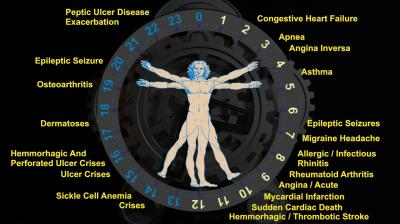 Circadian clock and diseases
